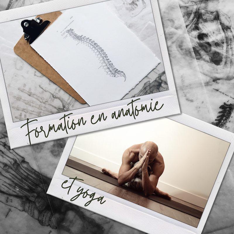 formation de yoga et anatomie